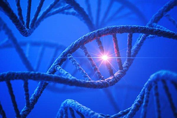 Calvície genética